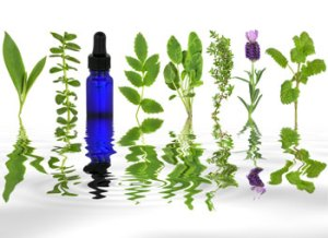 Essential oil plants